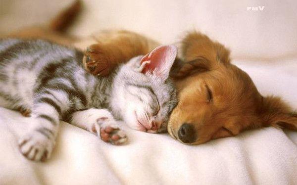 image animaux bonne nuit