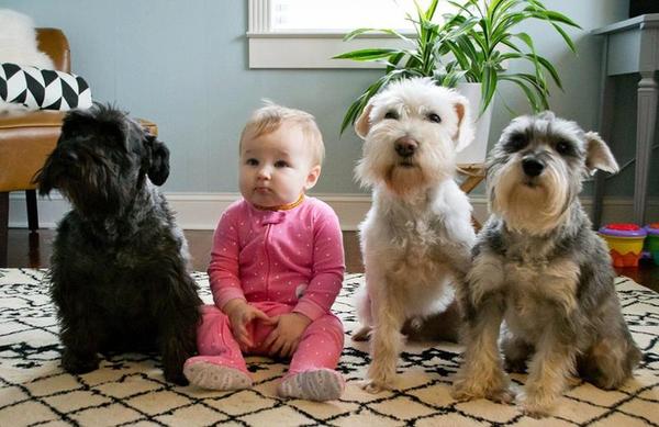 Enfant et chiens
