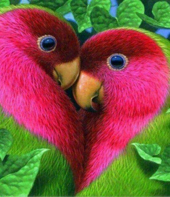 Câlins d'oiseaux