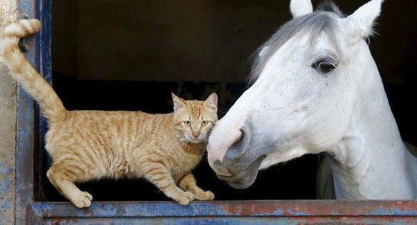 Animaux - Image animaux gratuite ...