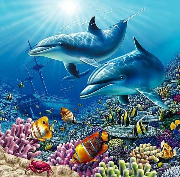 Le fond marin