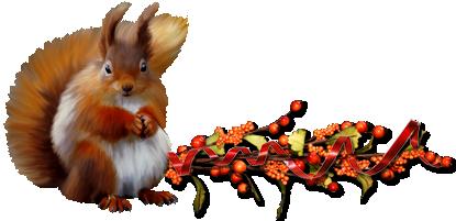 Barre séparation écureuil