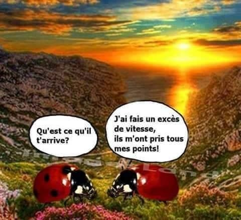 Humour coccinelle