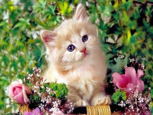 Petit chat dans les fleurs