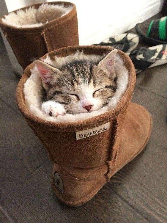 Dans la chaussure
