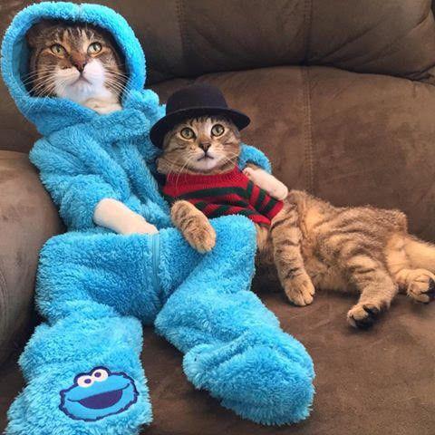 Chats sur canapé