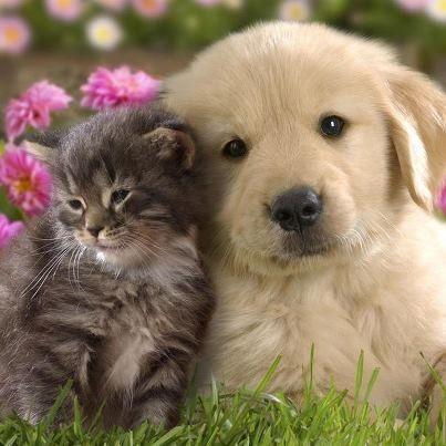 Câlin chien et chat