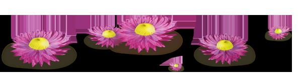 Barre de séparation fleurs roses