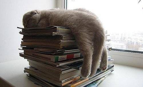Je dors sur les livres