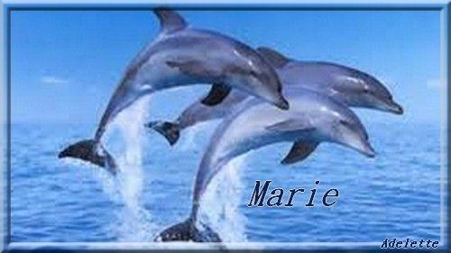 Dauphins bleus Marie
