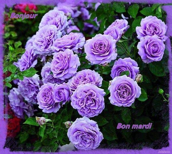Bonjour, bon mardi fleurs mauves
