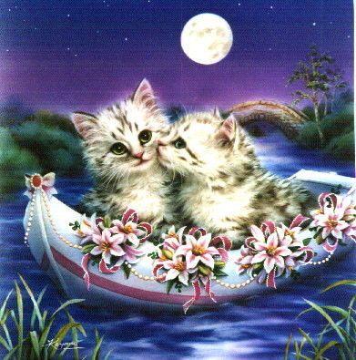 Chats clair de lune