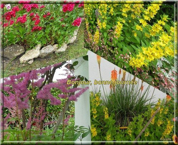 Bonjour, bonne journée fleurs du jardin