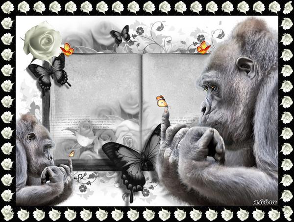 22 juillet singes