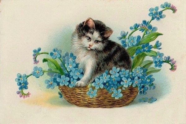 Carte ancienne chat et fleurs