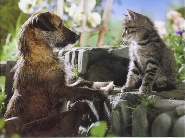 Chien et chat !!!!