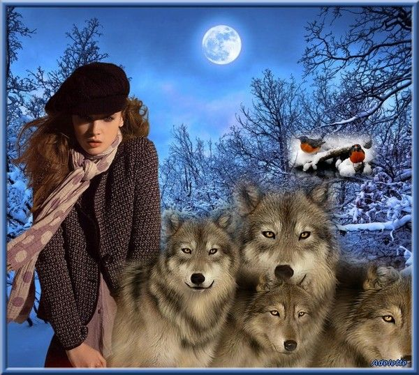 Loups hiver