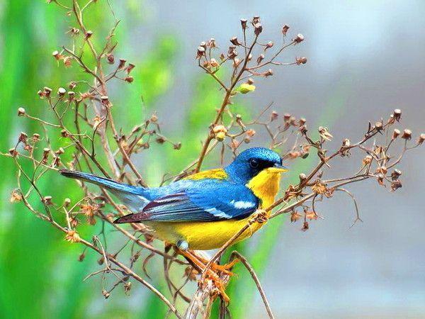 Oiseau qui annonce le printemps