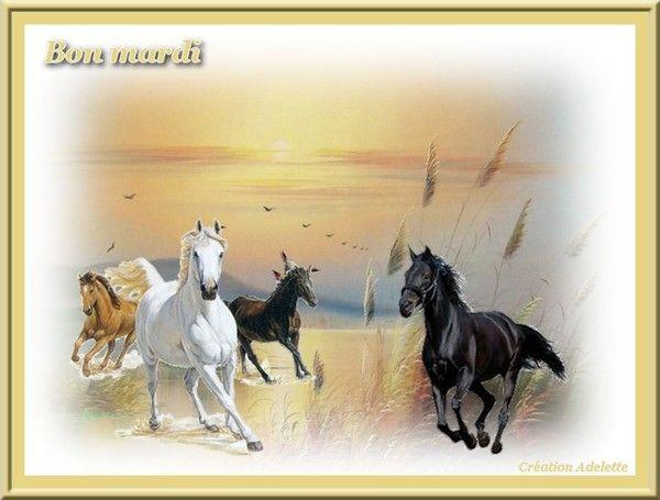 Bon mardi chevaux