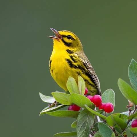 Bel oiseau