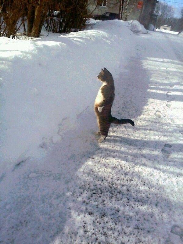 Hiver et chat