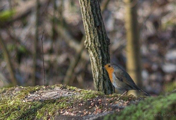 Oiseau dans les bois