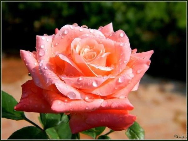 rencontré adulte LHaÿ-les-Roses