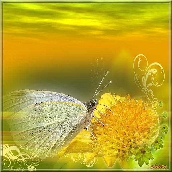 Fond jaune et papillon