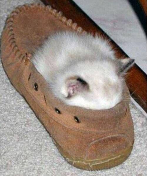 Je dors dans la chaussure de mon maître