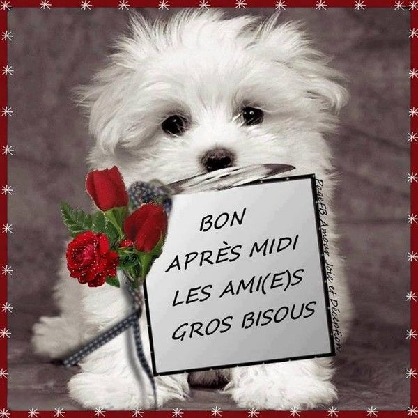 Bonjour, bonsoir..... - Page 2 B329f0b4