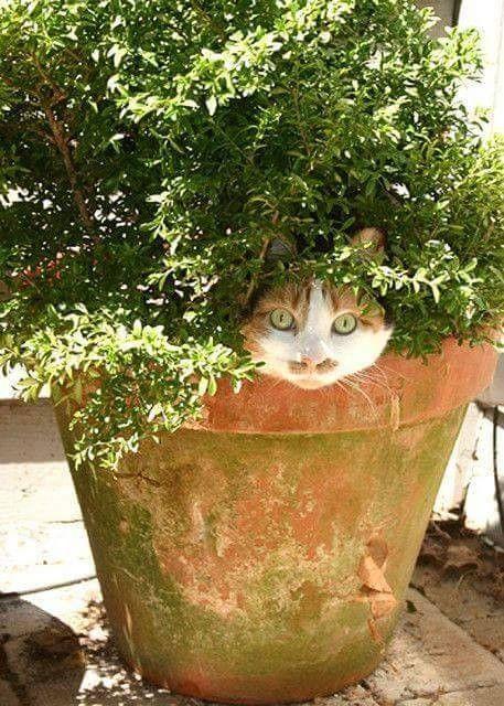 Chaton dans un pot