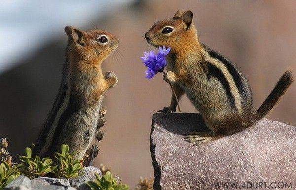 qu'ils sont mignons , écureuils