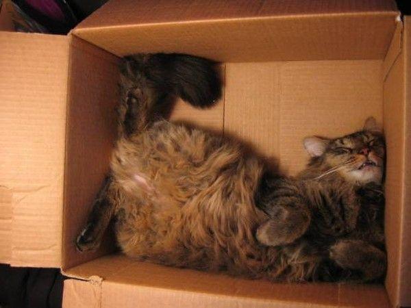 Dans une boîte en carton