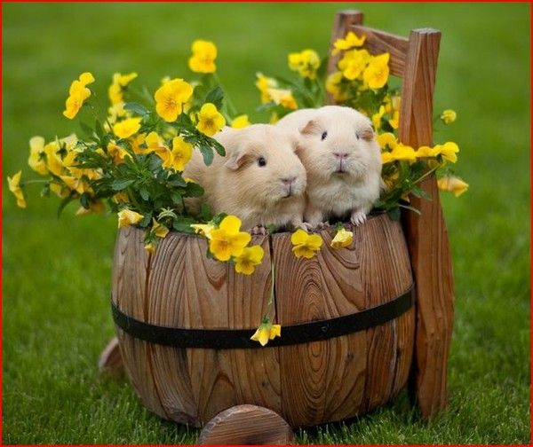 Petites souris blanches