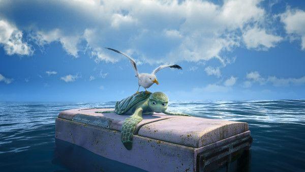 Oiseau sur tortue !!!
