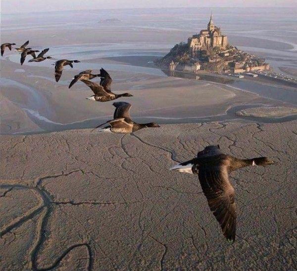 Oies sauvages au dessus du Mont-St-Michel