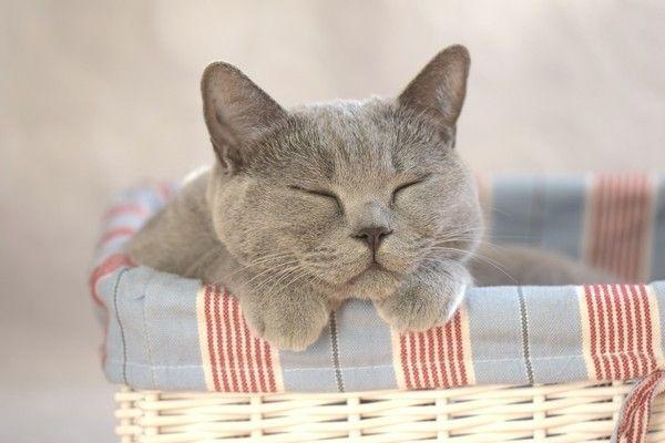 Laissez moi, je dors
