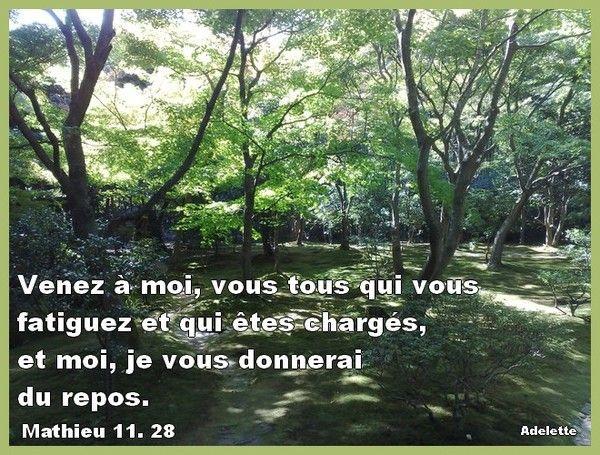 Matthieu 11, 28