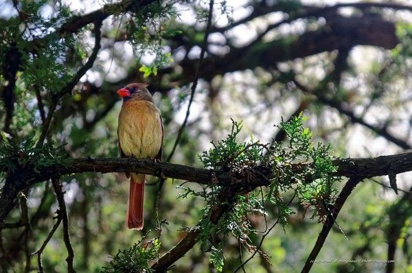 Oiseau Central park