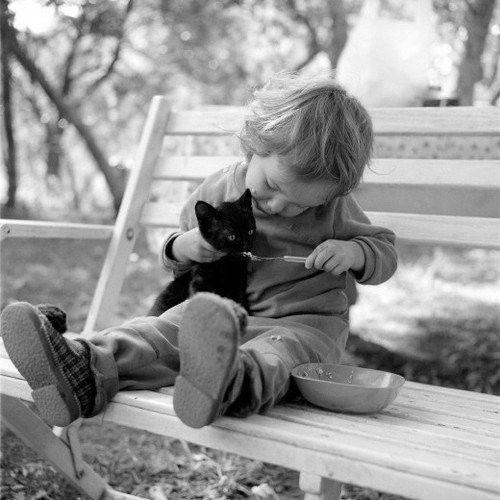 Enfant donnant à boire à un petit chat