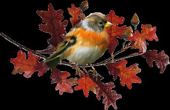 Résultat d'images pour Gifs feuilles et oiseaux automne